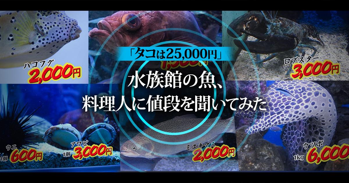 「タコは25,000円」水族館の魚、料理人に値段を聞いてみた