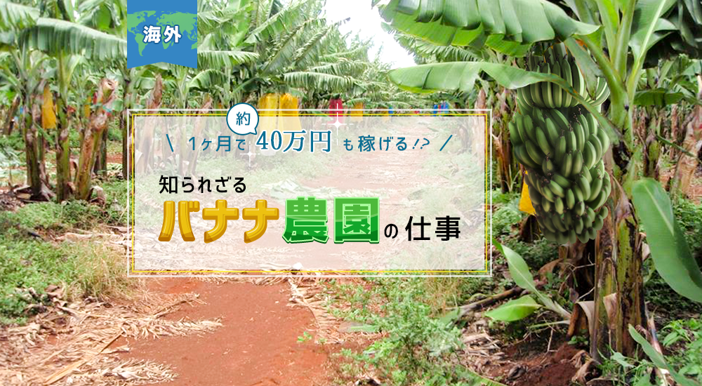 【海外】1ヶ月で約40万円も稼げる!? 知られざる「バナナ農園」の仕事