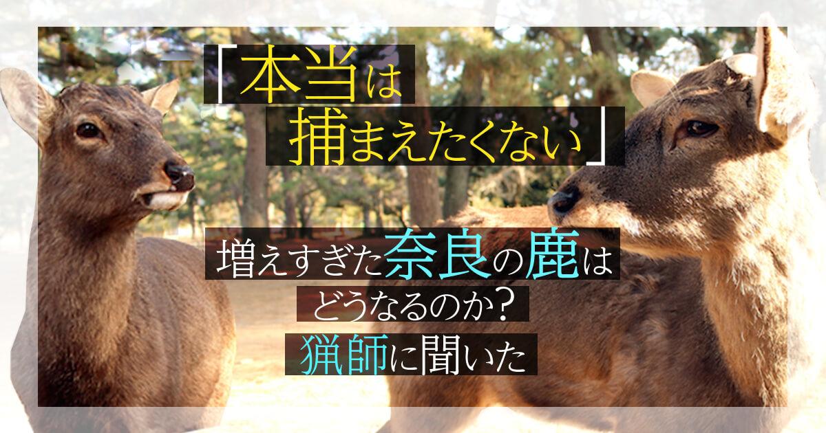 「本当は捕まえたくない」増えすぎた奈良の鹿はどうなるのか?